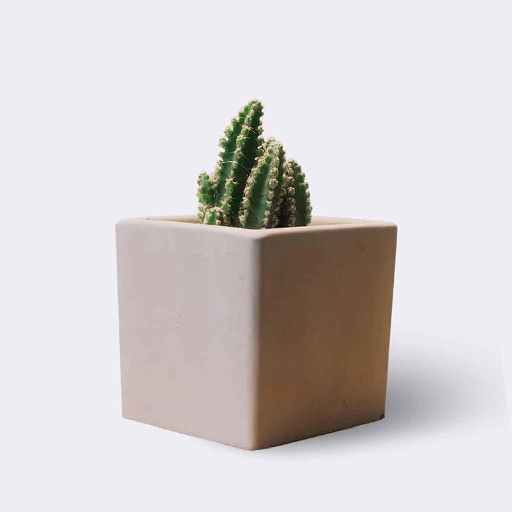 cactus2-free-img